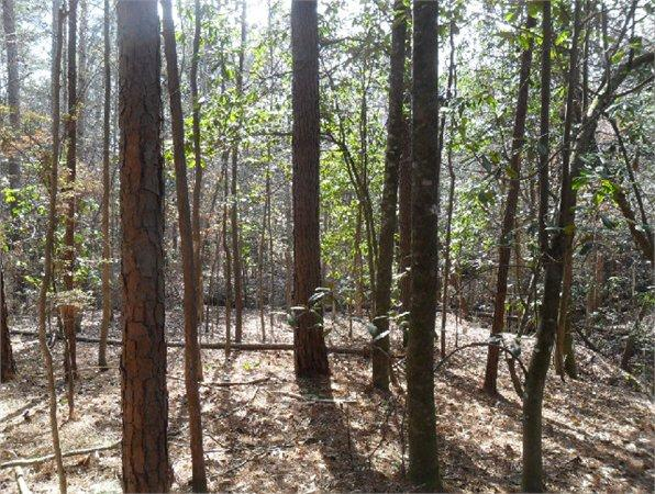 Thomasville, AL Clarke Country Land 26.000000 acre