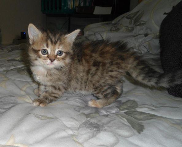 female cat furry