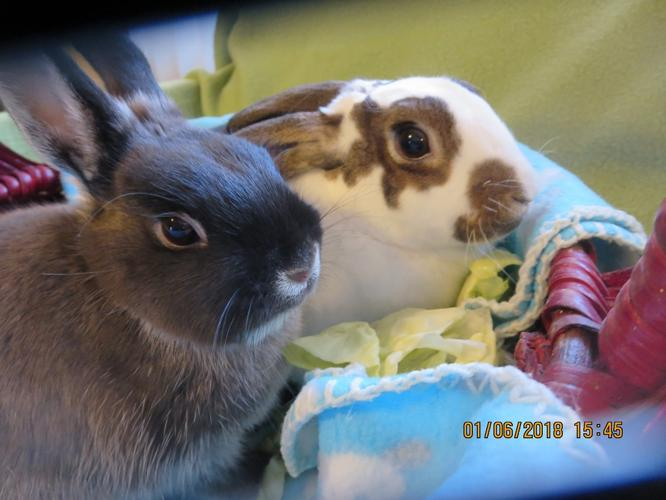 TINAMARIE and VELVET (MARIE) Dwarf Baby - Adoption,