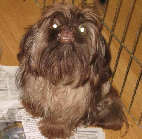 Pets And Animals For Sale In Frankfort Ohio Puppy And Kitten