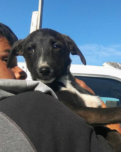 Tommy Terrier Baby - Adoption, Rescue