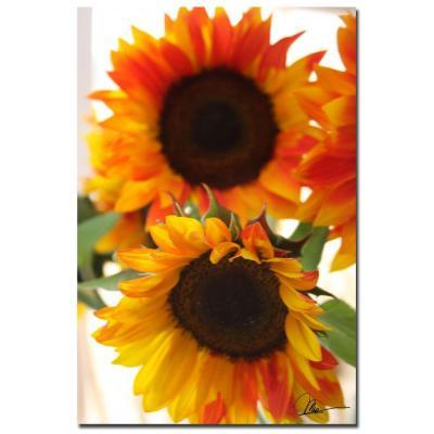 Trademark Fine Art 24 in. x 16 in. Sunflower VI Canvas