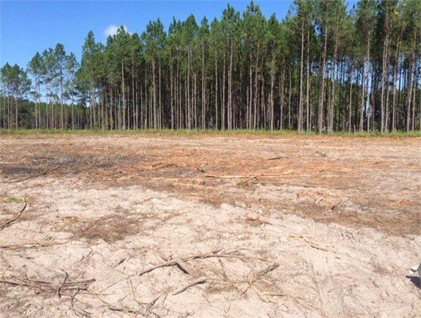 Trenton, FL Gilchrist Country Land 22.000000 acre