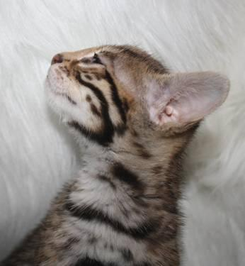 best cat litter to buy