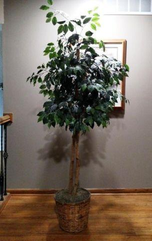 Two 2 Artificial Ficus Trees