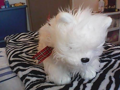 Ty Inc 2001 Plush White Dog With Plaid Ribbon For