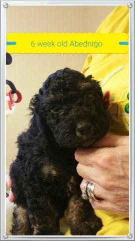 Pets And Animals For Sale In Louisville Kentucky Puppy And Kitten
