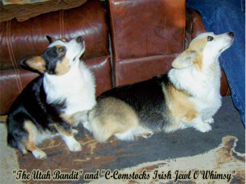 UNBORN AKC Pembroke Welsh Corgi Puppies