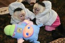 Very Healthy and Lovely Monkeys Available