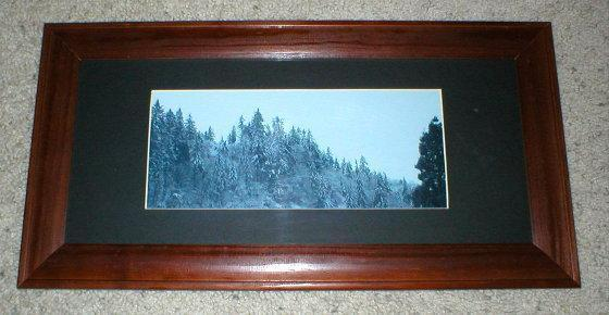Vintage Photo - Washington State Evergreens with Snow -
