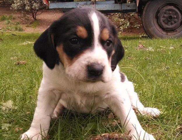 Walker Mower Pets And Animals For Sale In The Usa Puppy And Kitten