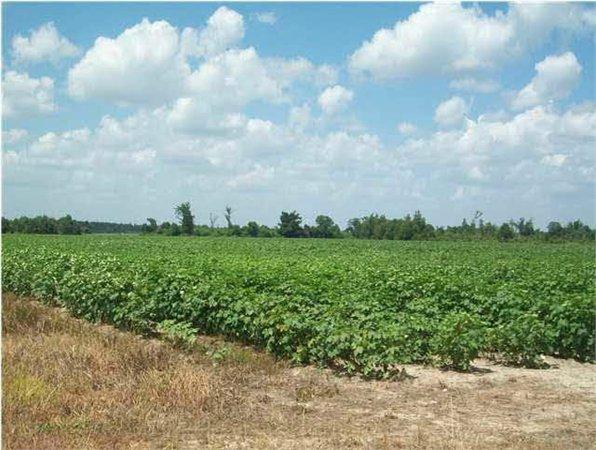 Walnut Hill, FL Escambia Country Land 131.630000 acre