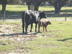 Wanted 25-100+ Acres Needed for Cattle in Lake County