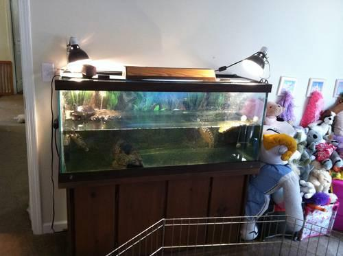 Water Turtles With 75 Gallon Aquarium And Accessories For Sale In Benson North Carolina