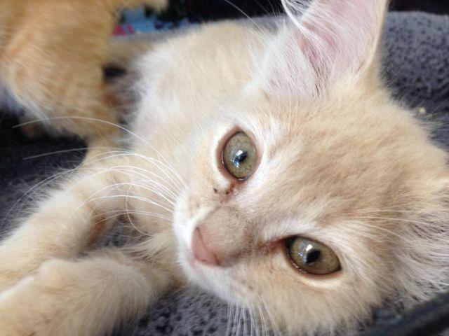 We have adorable kittens for adoption for sale in la verne for A cut above pet salon