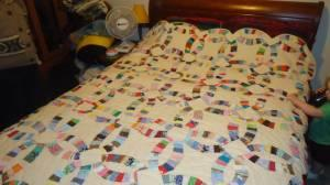 Wedding ring Quilt - $80 (Elizabethtown ky)