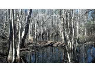 Westville, FL Holmes Country Land 41 acre