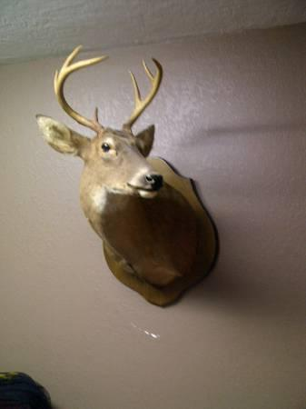 Whitetail deer mount and bass fish mounts, taxidermy, home decor - $1