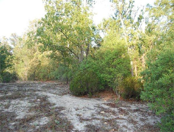 Williston, FL Levy Country Land 0.300000 acre