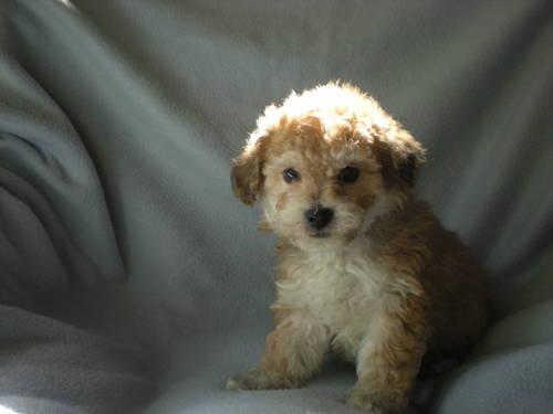 Pets And Animals For Sale In Loveland Ohio Puppy And Kitten