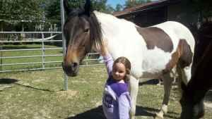 Young Tir Color Paint almost 7 yr old Mare Saddle,