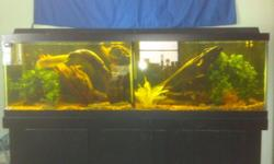 """Black 125 Gal. Aquarium (2) 36"""" Flourescent Lights, (2) Emperor 400 Filters, over 100lbs Gravel, Stand, (2) LG Oscars Albino/Tiger, (1) 20"""" Silver Arowana - worth over $150 alone! Price is negotiable,"""