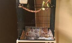 I am selling a lot of 5 young parottlets ...1 proven pair and 3 babies...$375.00 as a lot with with cage and toys. $100.00 each if family is broke up. Please text or email for additional information..