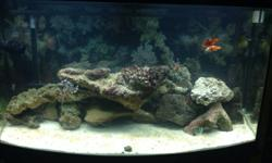 We are going to be moving most likely so I am selling our saltwater aquarium setup. It is a 50 gallon bow front, it has 50lbs of live rock, live sand, currently has a pink spotted goby, snowflake eel,