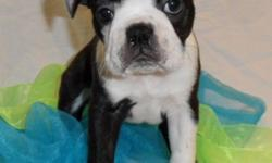 Rufus is the calm and more laid back of the lot. He is typically content kicking back and observing his siblings. While laid back, this little guy still has a fair bit of spunk when he gets prepared t