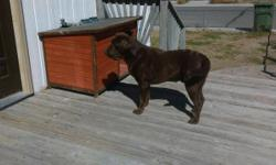Looking for a home for our Male Akc chocolate Labrador retriever. He is great with kids loves the water he is crate and house trained. He mostly loves outside. He loves to fetch the ball and loves to