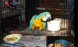 We are specialized in the breeding of birds/parrots and we sell very fertile candle lit eggs of all species of parrots. all our eggs are collected from very healthy birds in our aviary , candle tested