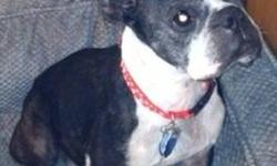 Boston Terrier - Princess-pending - Small - Adult - Female - Dog Forever home found in SD!!! Eligible for the Golden Paws Program   My name is Pr