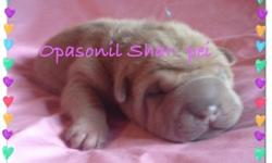 I have 2 trashes of Chinese shar-pei young puppies. Females and males, mini and toy size. Colors offered are blue, Isabella, black, sable and fawn. They are all blue line pedigree.$700 and up. They Co