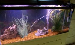 I have for sale a 55 Gallon All Glass Aquarium setup with STAND and all devices!  It includes 55 gallon all glass tank, the background, the white painted stand w / double doors (some stands have a tin