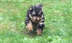 Marley is a beautiful 5 month old female. She is Black and Tan. She is doing well on housetraining. Marley is very loving and playful. Loves people and dogs. She is a real sweetheart!!!