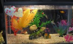 We have a 5.5 gallon fish tank and tropical fish for sale, which includes: -A glass Top Fin 5.5 gallon tank with a hang on filter (actual filter not included) -5 colorful plants -1 rock/tunnel decorat