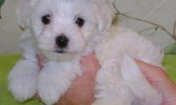 They have adorable teddy bear faces and are very healthy happy puppies.text,call/leave a voicemail at 415/x 758/x 2026x