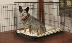 Durable pet crate designed with convenient features in mind Satin black Electro-Coat finish Ideal for pets up to 70lbs Easy setup with no tools required Fold and Carry Configuration Safe and secure sl