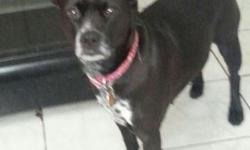 Loveable Luna  Adorable Female Lab Mix  Supplies, Vet Care Included Hi, My name is Luna I am a 7 year old black Lab mix for adoption in Woodbridge, NJ in need of a loving home with a couple or family.