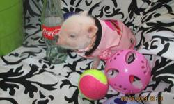 OUR OCT BABIE'S ARE READY TO GO CALL 864-373-3115 FEEL FREE TO VISIT CHARLOTTE'S WEB MINI PIGS CALL DEBBIE 864-373-3115 YOU GET ONE OF OUR MINI PIG'S also visit charlotte's mini pigs on facebook and s