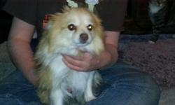 She so sweet and loving she's 2 loves kids and other animals she small her human mom is in a nursing home she needs home