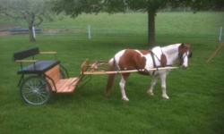 """43"""" Paint Pony - 7 years old, 30 Professional Training Last Year, Rides and Drives LIke New Easy Entry Amish Built Cart - Only 1 year old! $700 for Pony and Cart Call for more details 765-238-1251 //"""