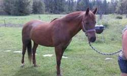 14 yr quarter/arab mare. good horse just have too many. needs experienced rider,was ridden last year,needs some tuning w/ someone that has time. will trade for fencing,t posts calves,hay ect. call 541