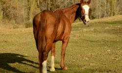Quarterhorse - Buck - Medium - Adult - Male - Horse Buck is a 4 to 5 year old Buckskin quarter horse gelding. He's small but stout. He was found abandoned in Rankin County and eluded Animal Control fo