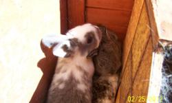 All purpose rabbits for sale, ages range from 8 weeks to 1 1/2 year, and weights between 2 and 7 pounds.Will negotiate for larger quantities. We have a lot of greys and browns. Ten dollars for eight w