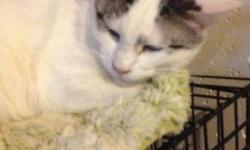 Eskimo was rescued from a house where he was taking on rodents for meals. The caretaker had come to be handicapped and primarily not able to live alone and/or care for the felines he loved. Eskimo was