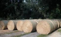 5' ROLLS Located @ corner of Tom Costine and 914 Driggers rd North Lakeland . Jack loads 7 days a week 9 am til dark. Stop by and look at the hay. Jack is normally setting under the shade tree or in p