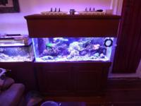 I am putting up for sale my 75 gallon saltwater mixed