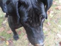 I am rehoming a black female great dane. She has not