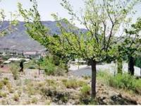 1/2 Acre Residential Lot in Truth or Consequences, NM.